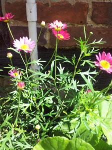 wild-flower-eternity-in-an-hour
